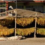 Tobacco drying - Turkey
